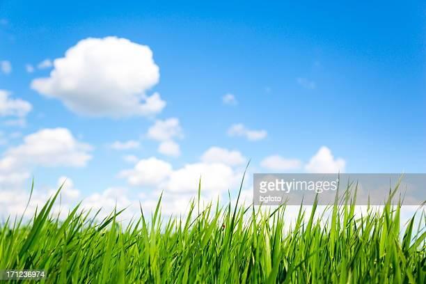 Gras und Himmel-XXXL