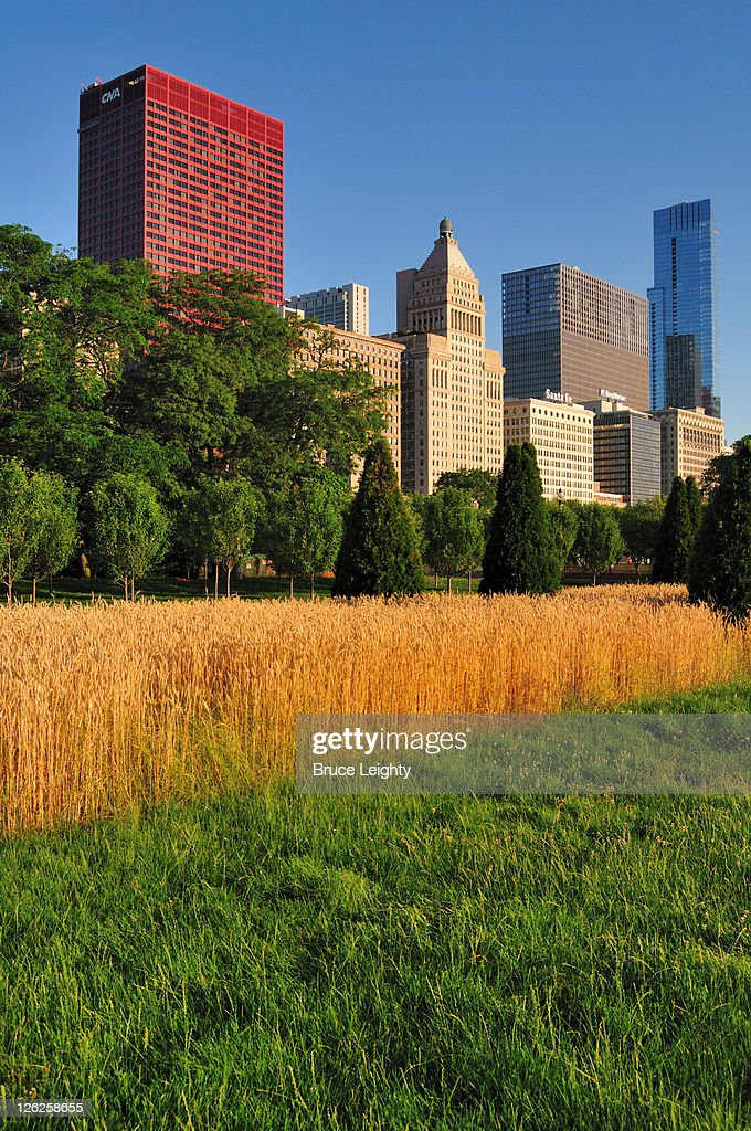 Grass and South Loop Skyline