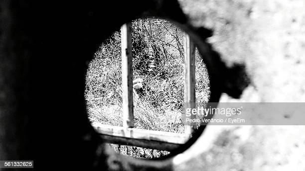 Grass And Trees Seen Through Hole In Wall
