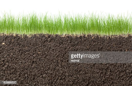 grass and white background