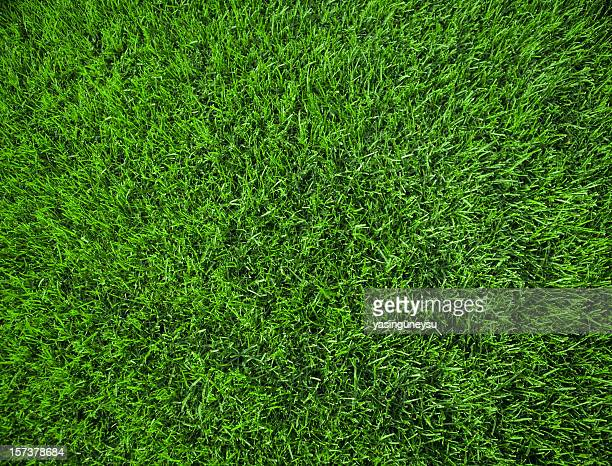 Fond herbe