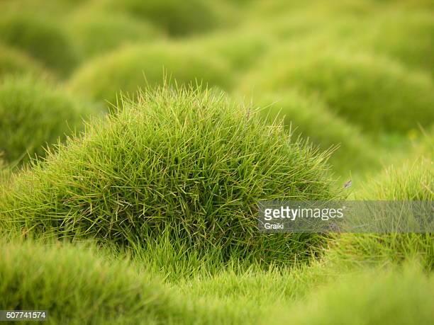 Grass background soft focus