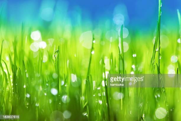 草背景にレイン滴
