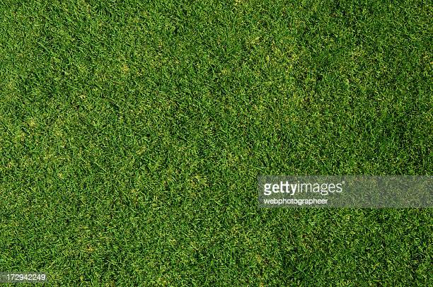Grass background XL-K