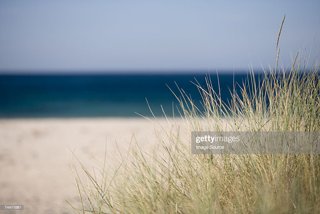 Grass by the coast : Stock Photo