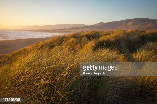 Grass covering dunes by the beach, California
