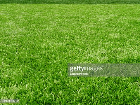 Grass field for football sport : Stock Photo