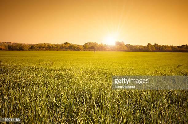 Grass field landscape at sunset