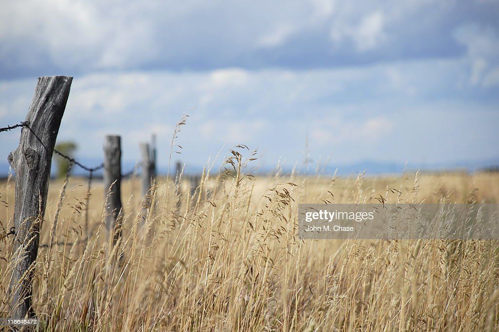 Grass Field with Fence Post