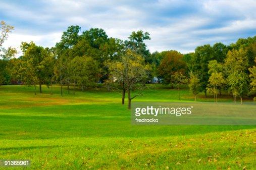 Campo di erba e alberi di parco durante la primavera e l'estate : Stock Photo