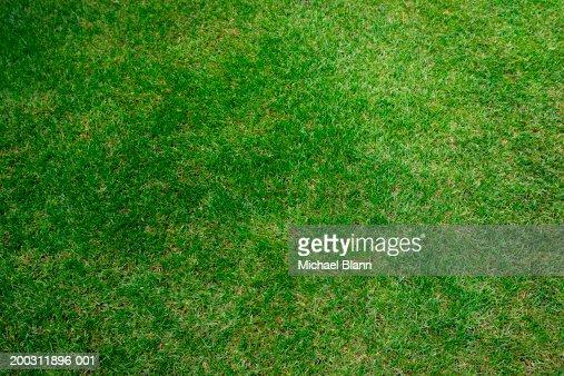 Grass, full frame : Stock Photo