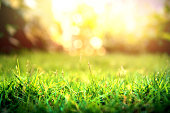 Close up grass green forest on spring sunset light background with copy space. Ecology and nature concept.