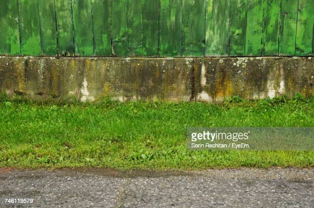 Grass Growing By Footpath Against Old Wall