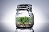 Grass growing in sealed jar