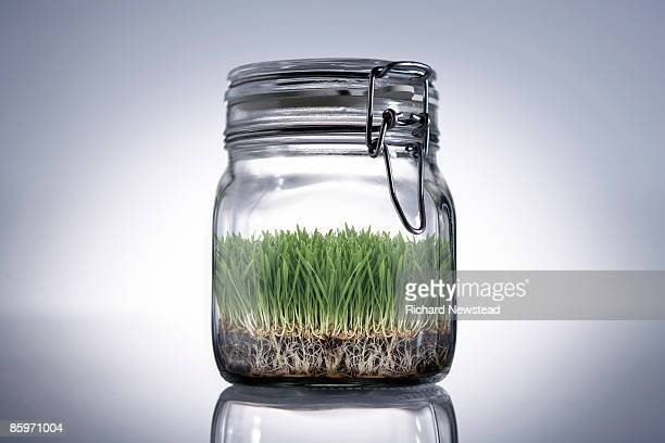 Grass growing in sealed jar