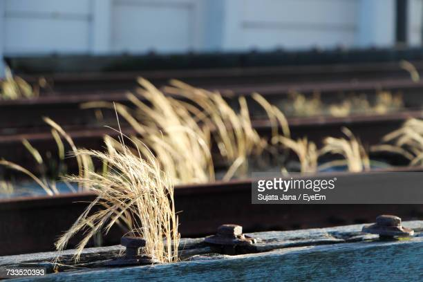 Grass Growing On Railroad Track