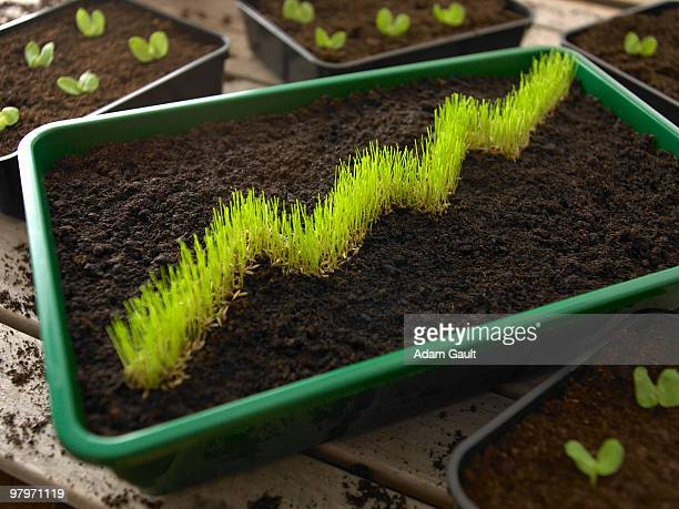 Grass in bin of dirt forming ascending graph