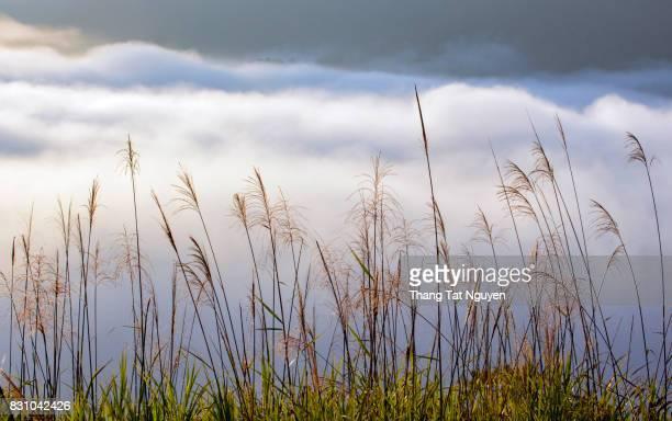Grass in cloud