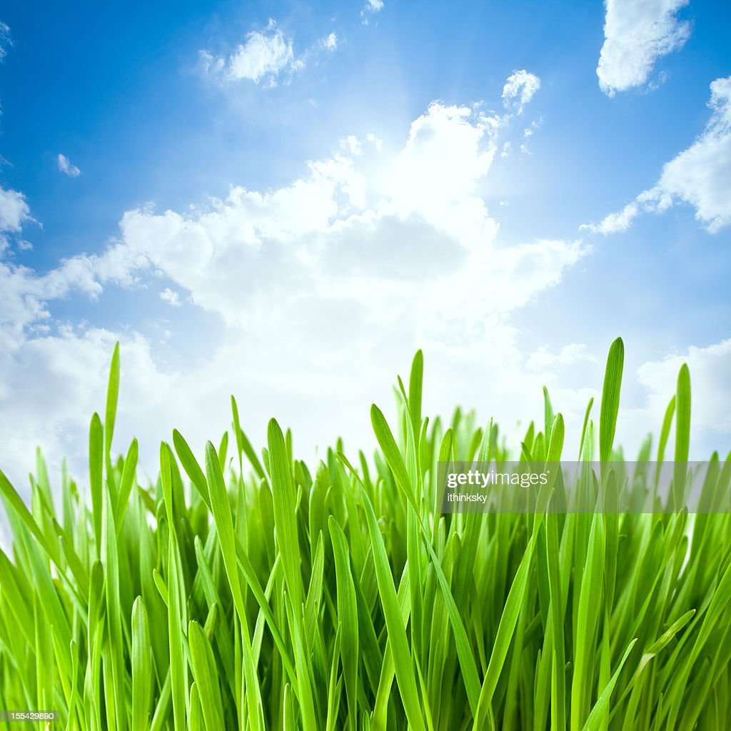 Grass in meadow : Stock Photo