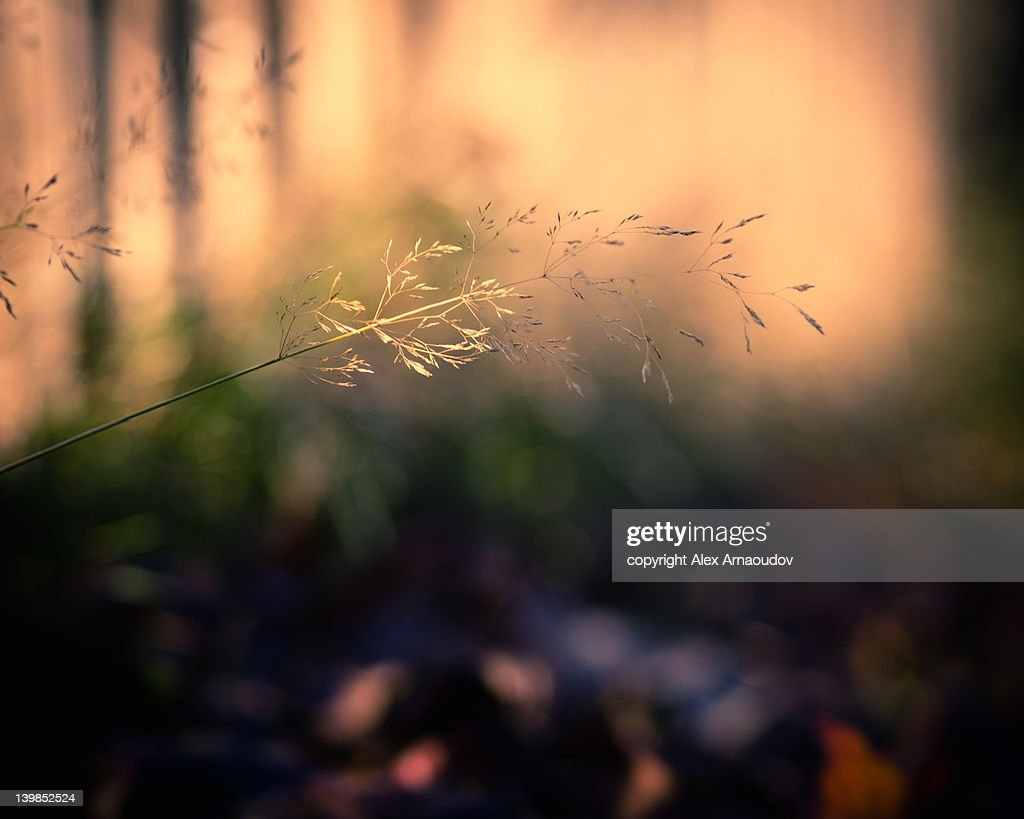 Grass in park : Stock Photo