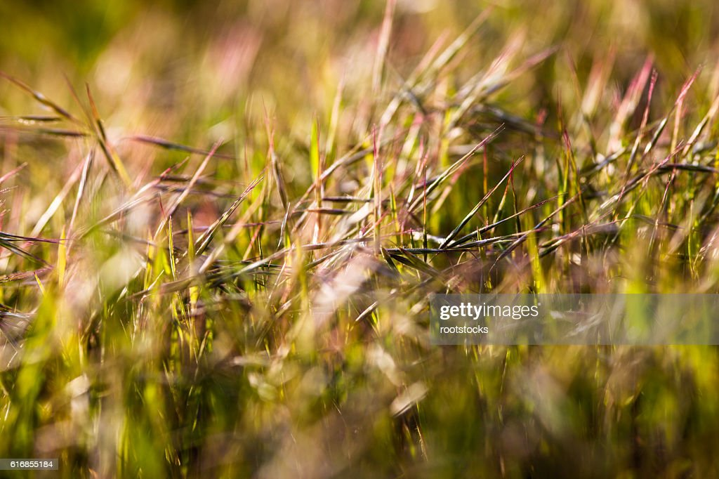 Grass in the sunshine : Stock Photo