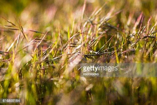 Grass in the sunshine : Stock Photo