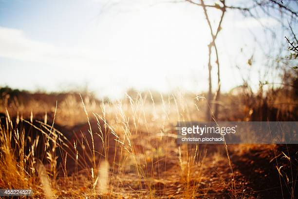 Grass in Tsavo East in the morning