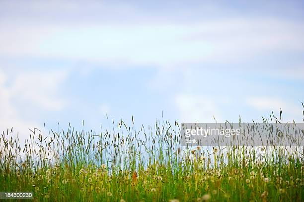 Grass meadow