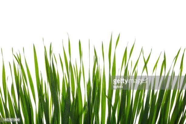 Gras auf Weiß