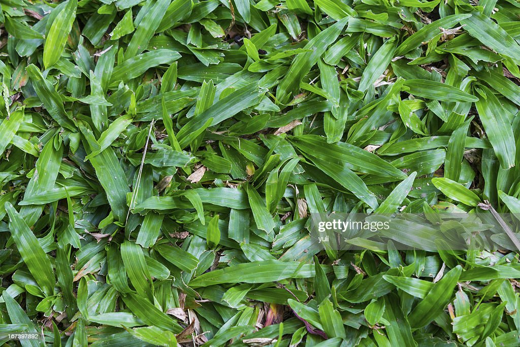 Grass : Stock Photo