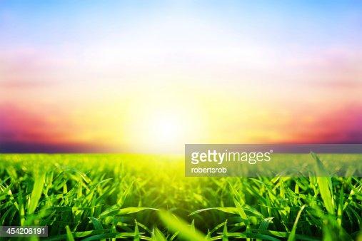 grass : Stock Photo