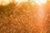 Grass prairie sun