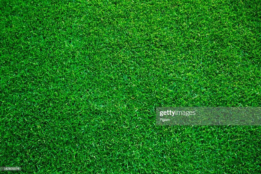 Grass turf on a sports field