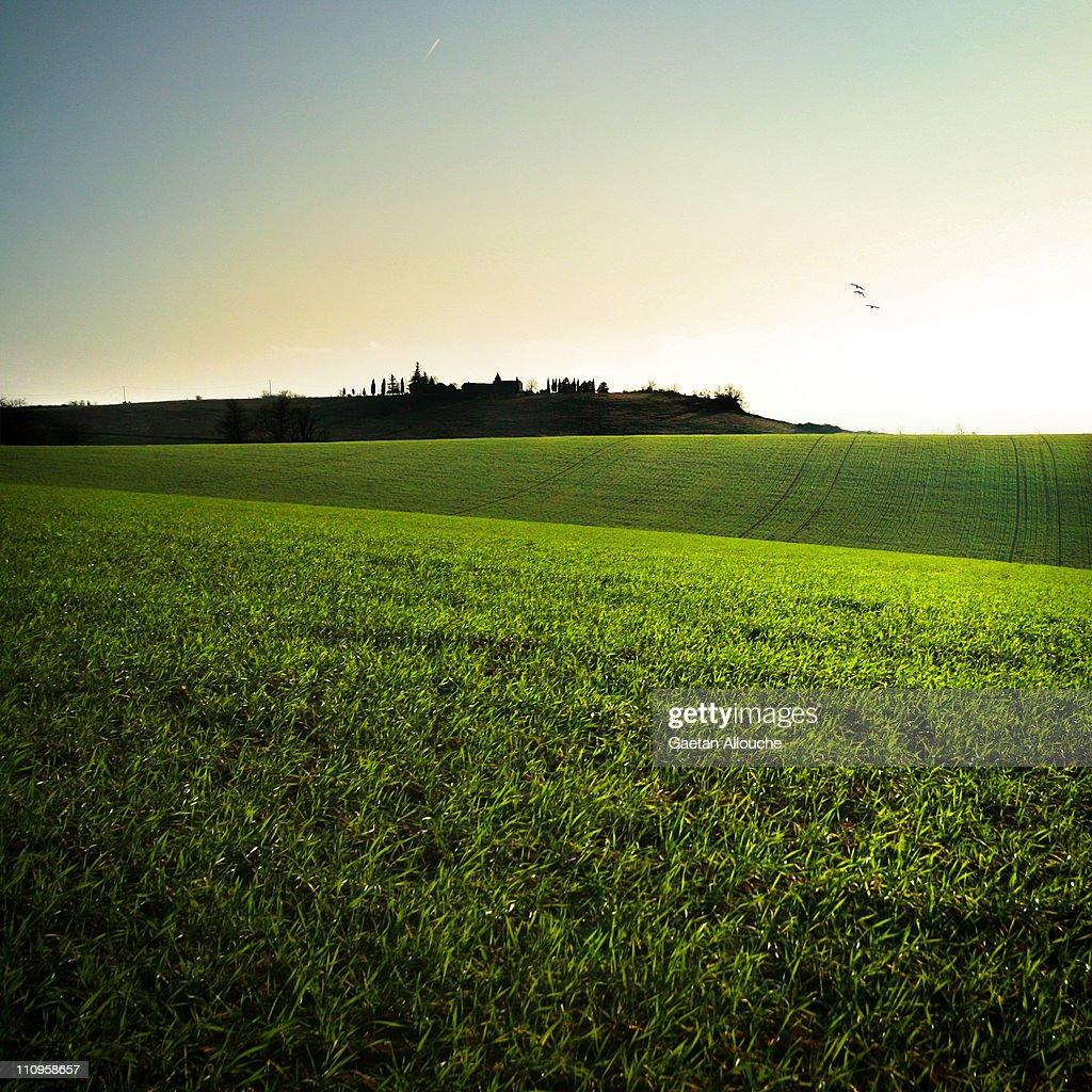 Grass waves : Stock Photo