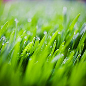 Grass with Fresh Water Droplets
