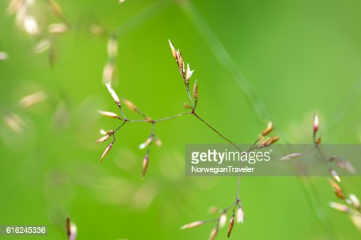 Grass with green background : Foto stock