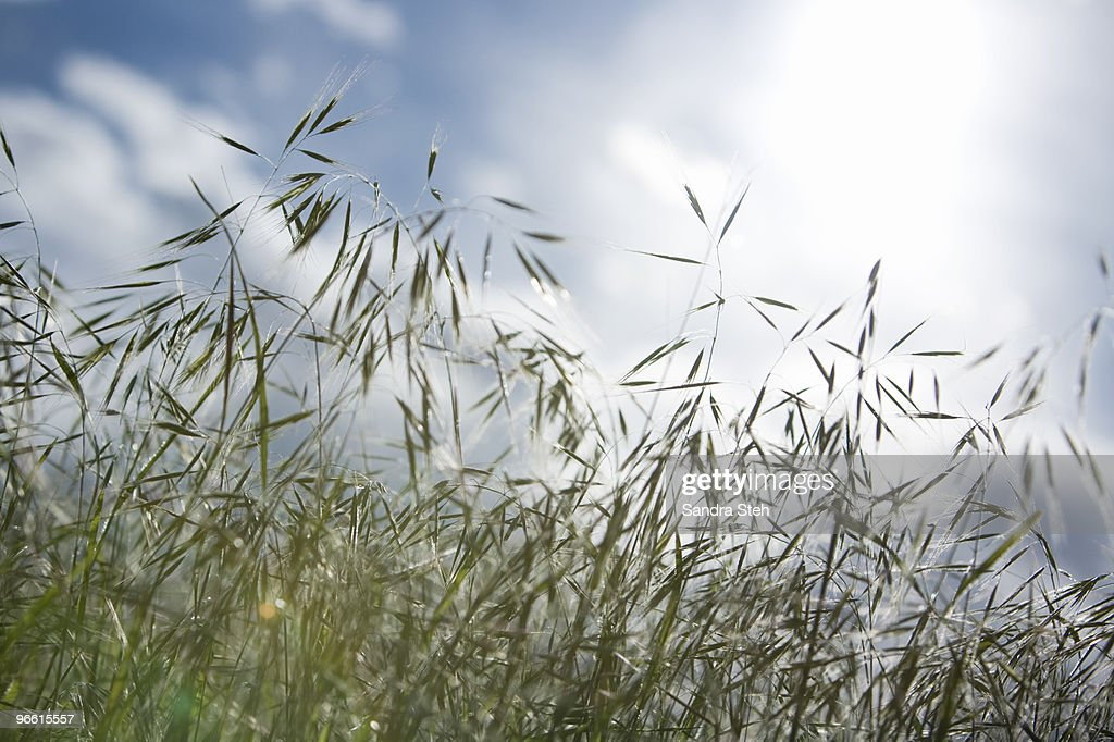 Grass with sky : Stock Photo