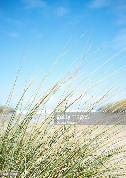 Grasses at beach