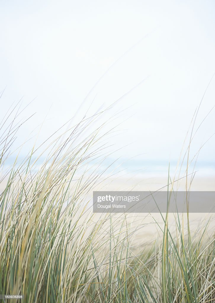 Grasses at beach