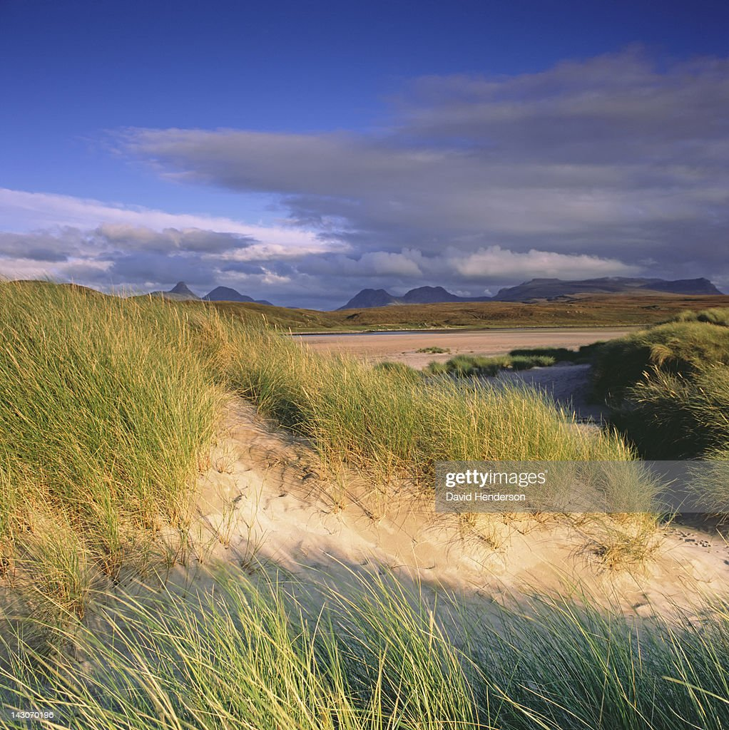 Grasses in sandy beach blowing in wind : Stock Photo