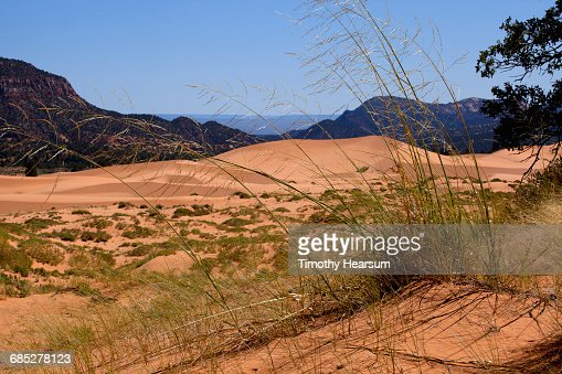 Grasses, sand dunes with mountains and sky beyond : Stock Photo