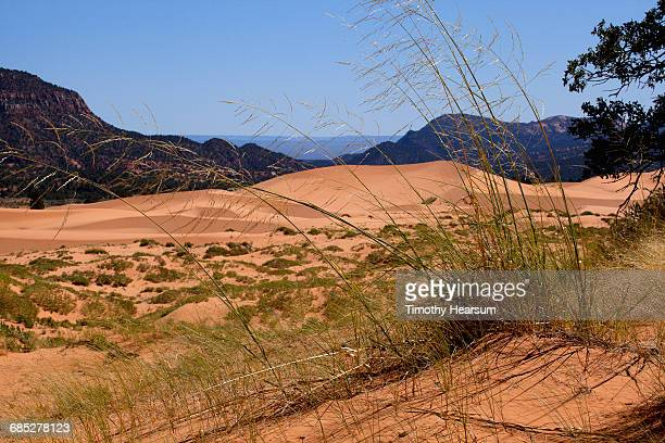Grasses, sand dunes with mountains and sky beyond