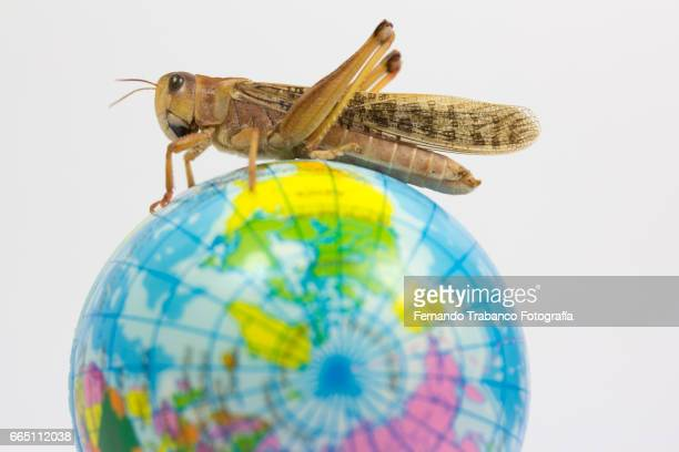 A grasshopper animal on top of a globe