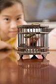 Grasshopper in a cage with a girl in the background