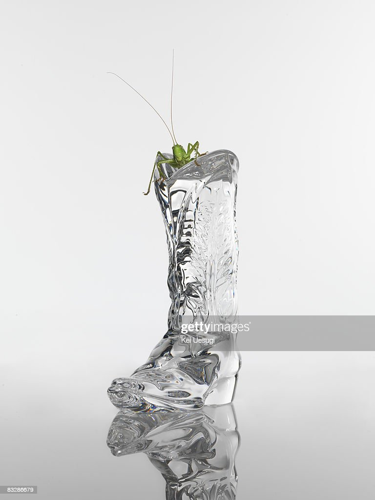 A grasshopper  : Stock Photo