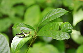 grasshopper with yellow and black colors hanging on leaf in wood
