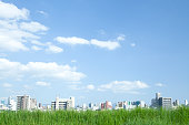 Grassland and city under the blue sky.