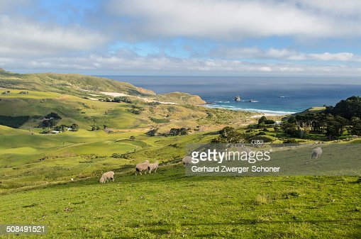 Grassland and the beach of Sandfly Bay, Otago Peninsula, South Island, New Zealand, Oceania