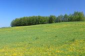 Grassland, Hokkaido