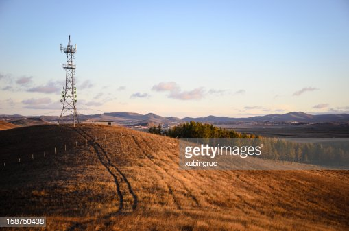 Grassland in the morning : Stock Photo